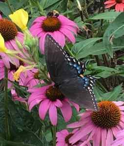 How to Get NWF Certified - Ewing Community Wildlife ...